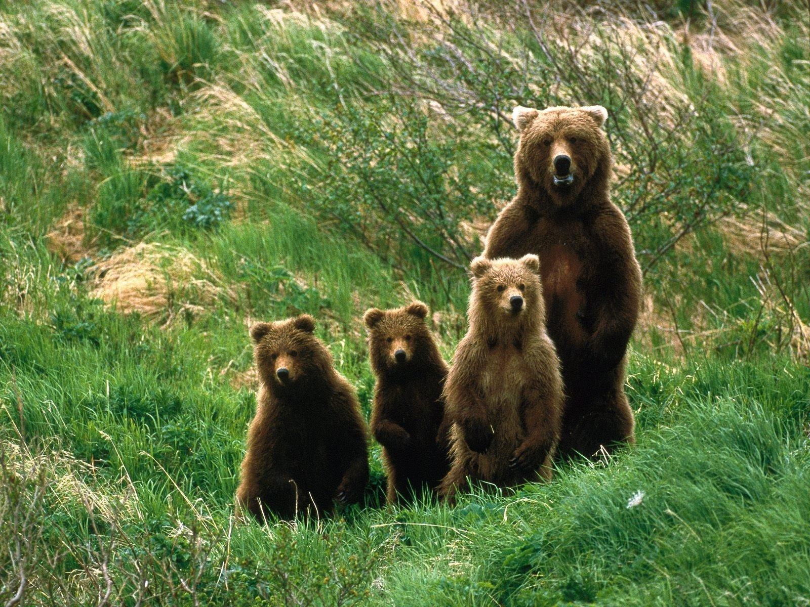 Знакомства Для Жителей Медведь