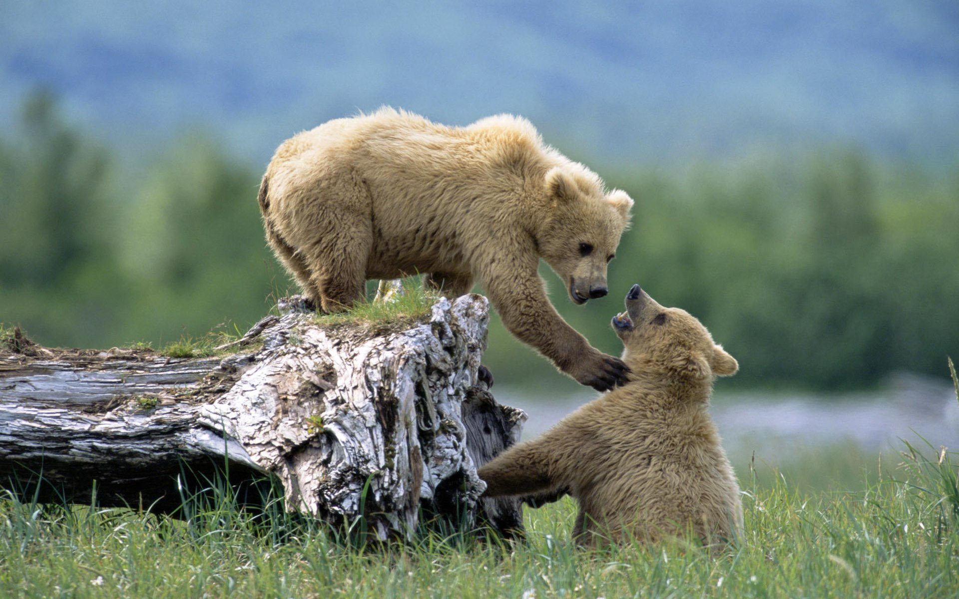 Красивые фото с животными на природе, открытки