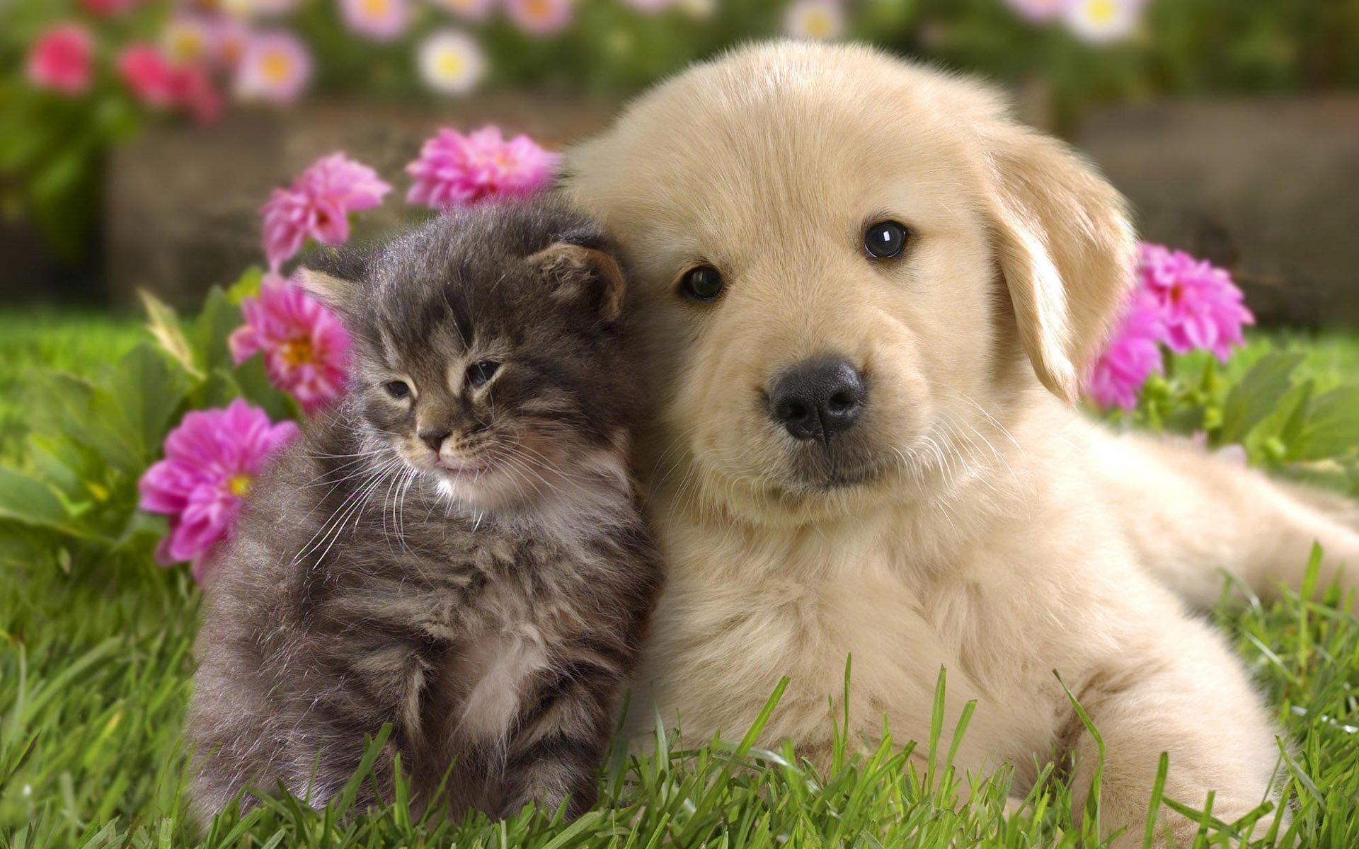Милые и красивые картинки животных, рождения