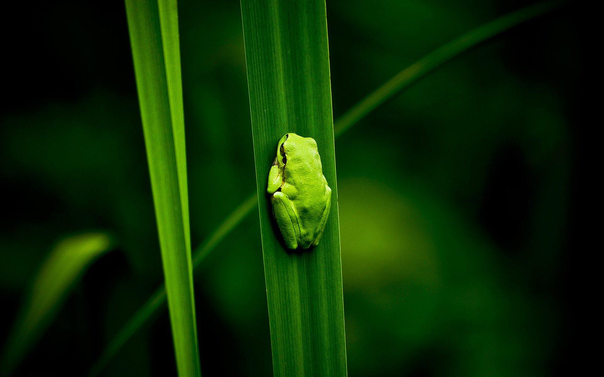 жаба лист фон  № 3164610 бесплатно