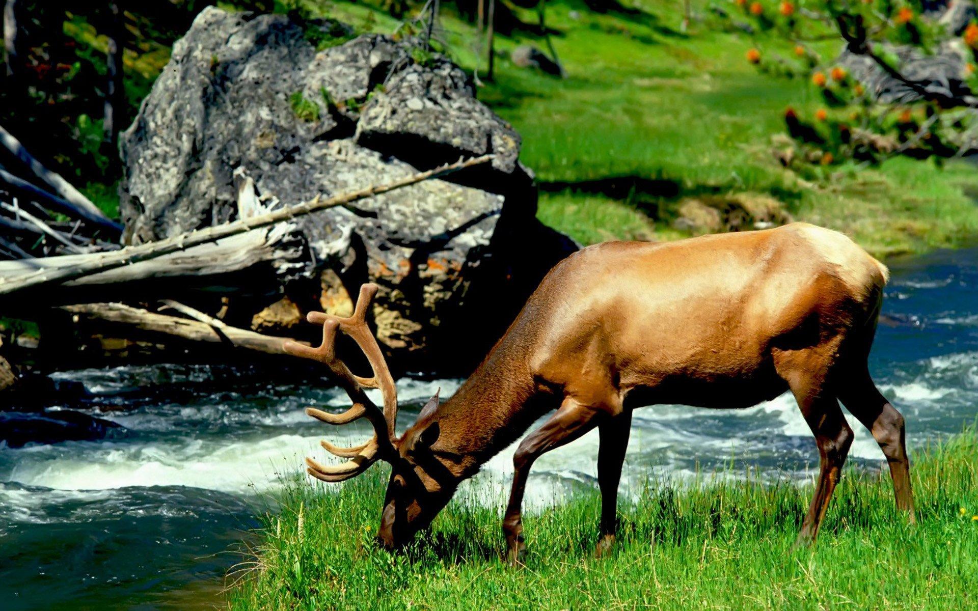 природа животные nature animals бесплатно