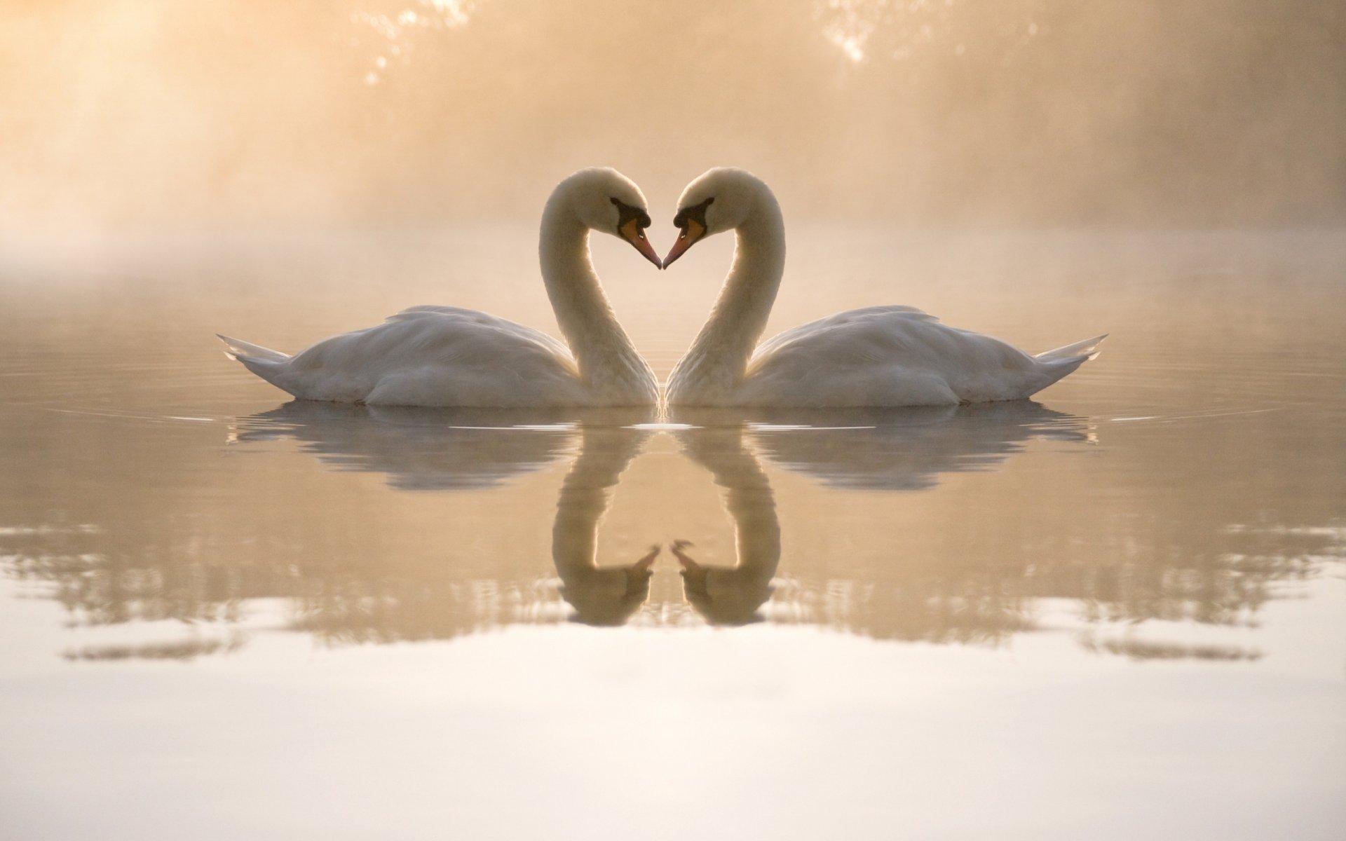 Открытки любви и природы