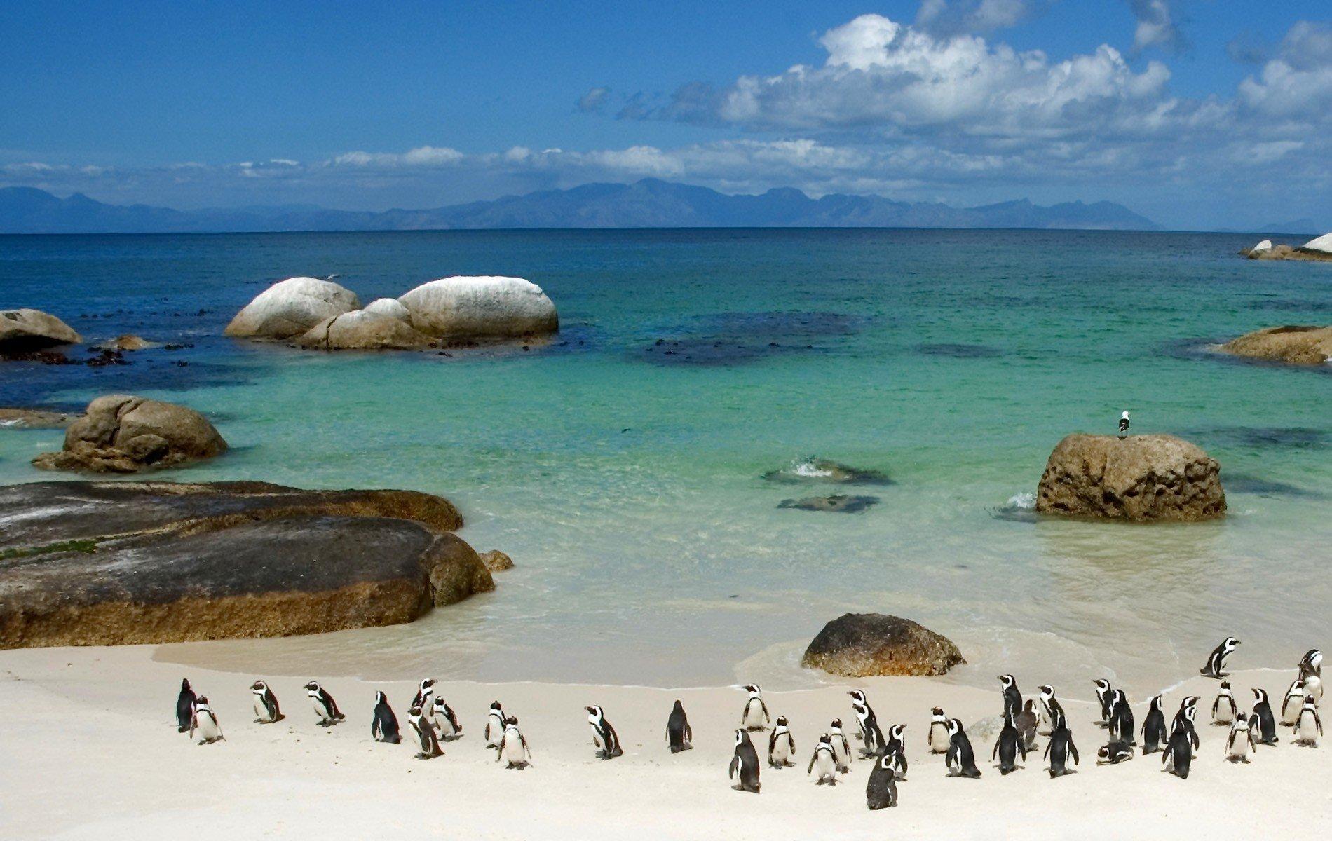 Пингвин на пляже скачать