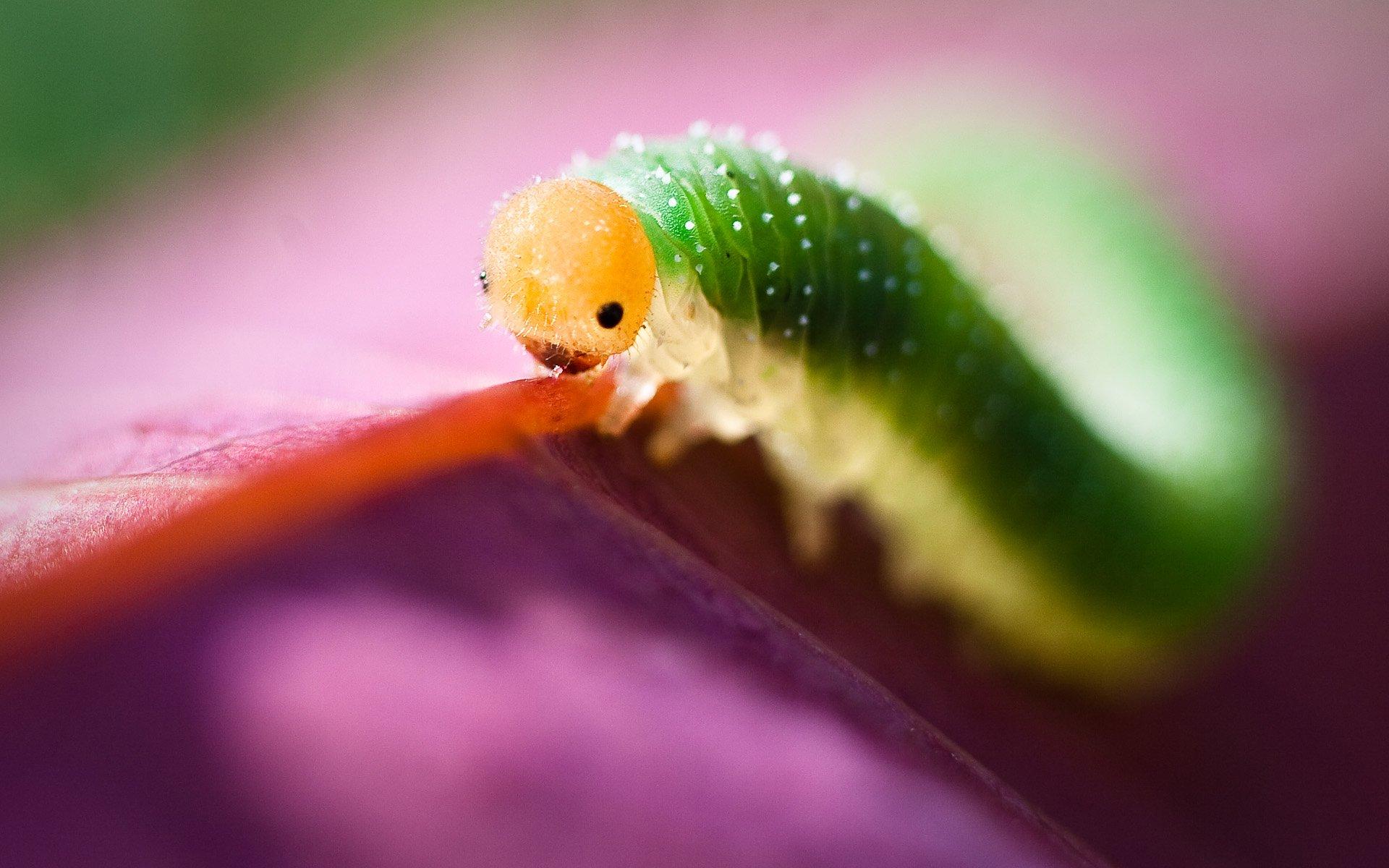 глаза картинки для гусеницы начале