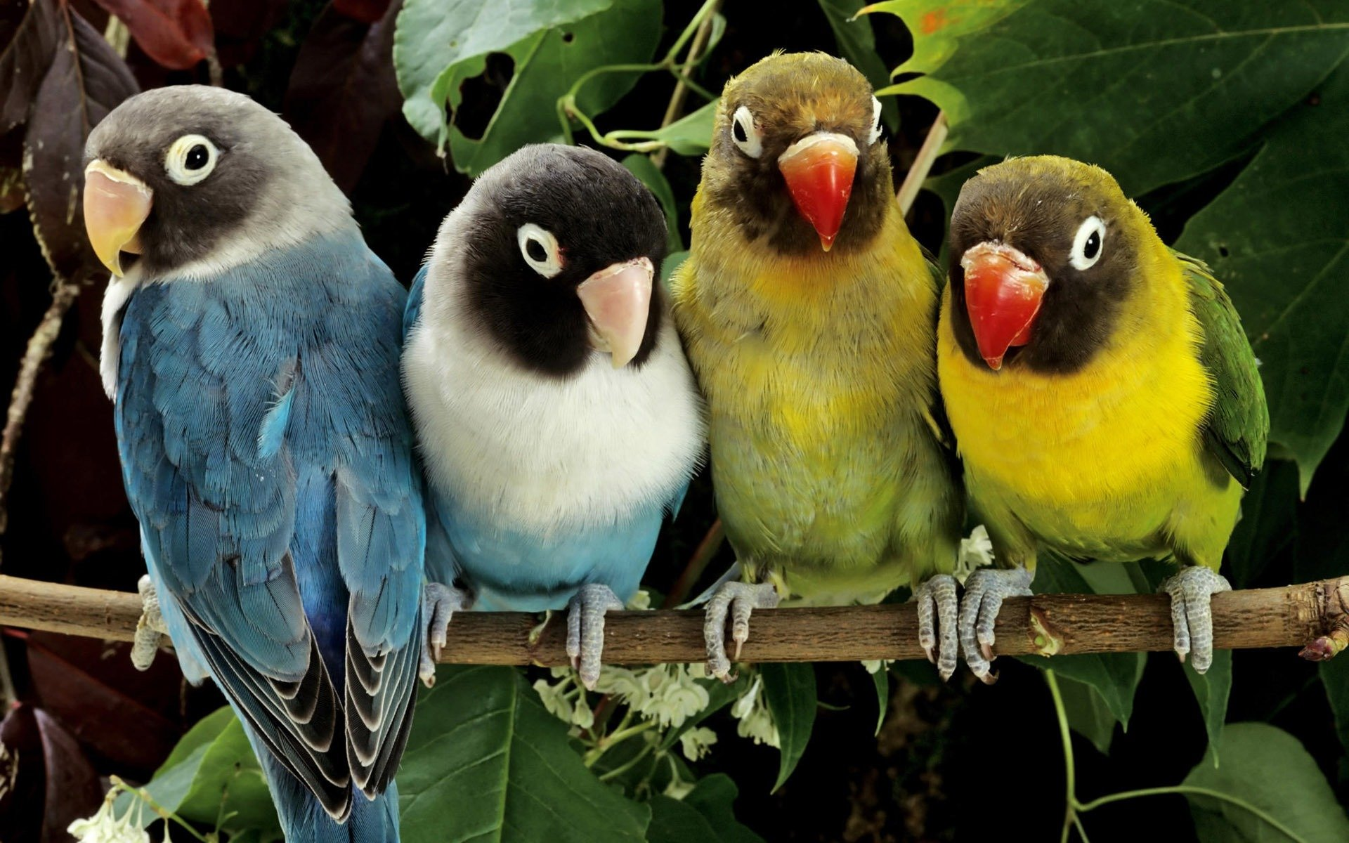 приснились красивые птицы яркие разных цветов синтетический вид