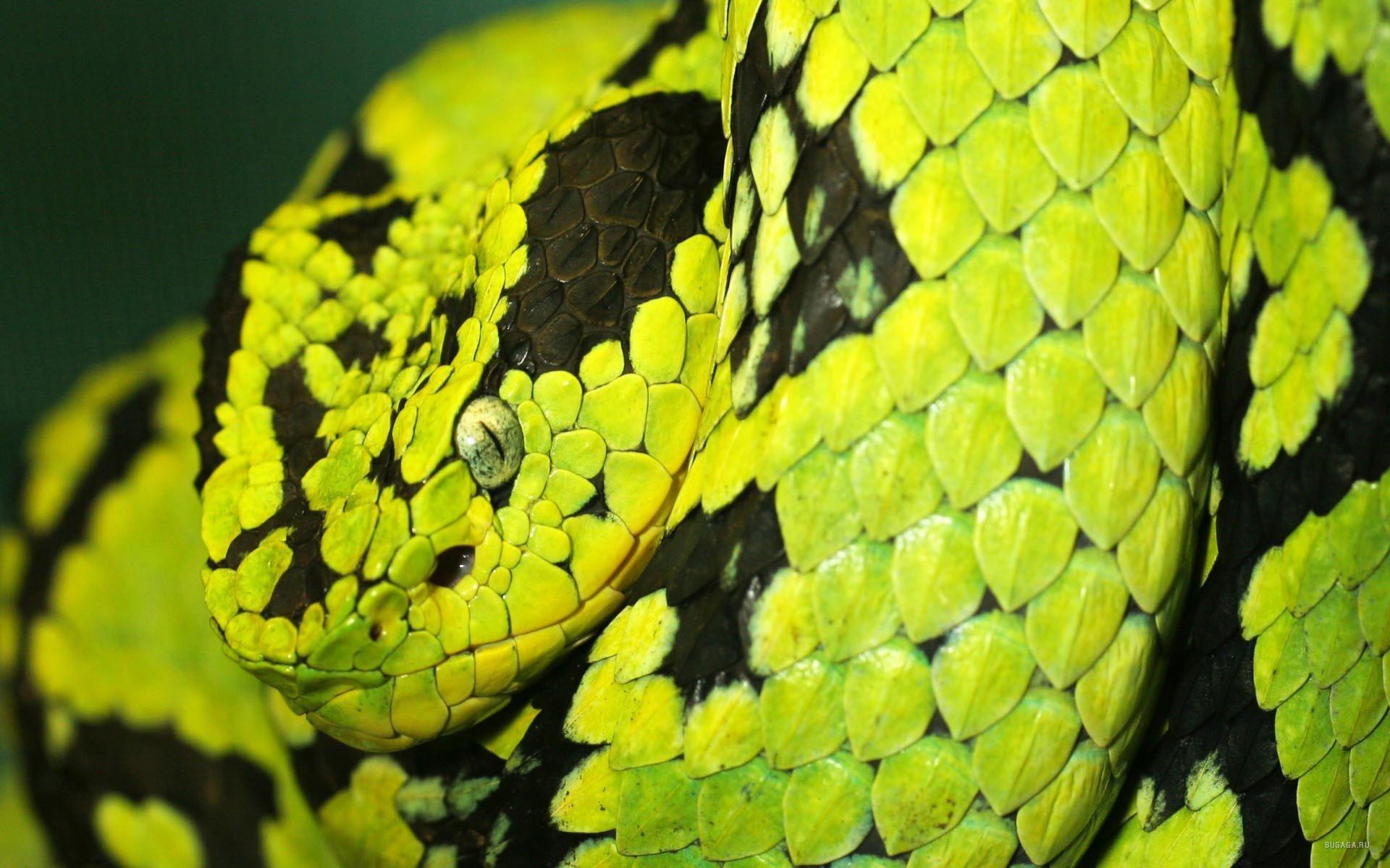 Зеленая змея макро загрузить