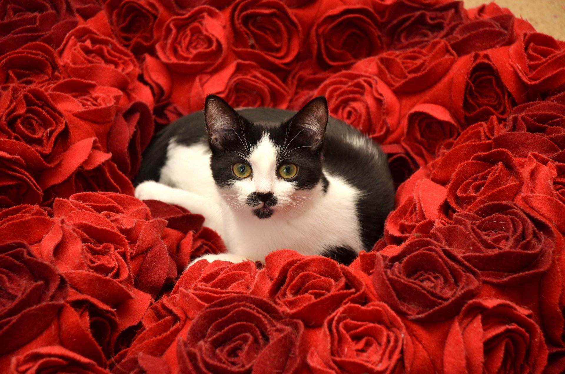 Фото черная кошка с цветами