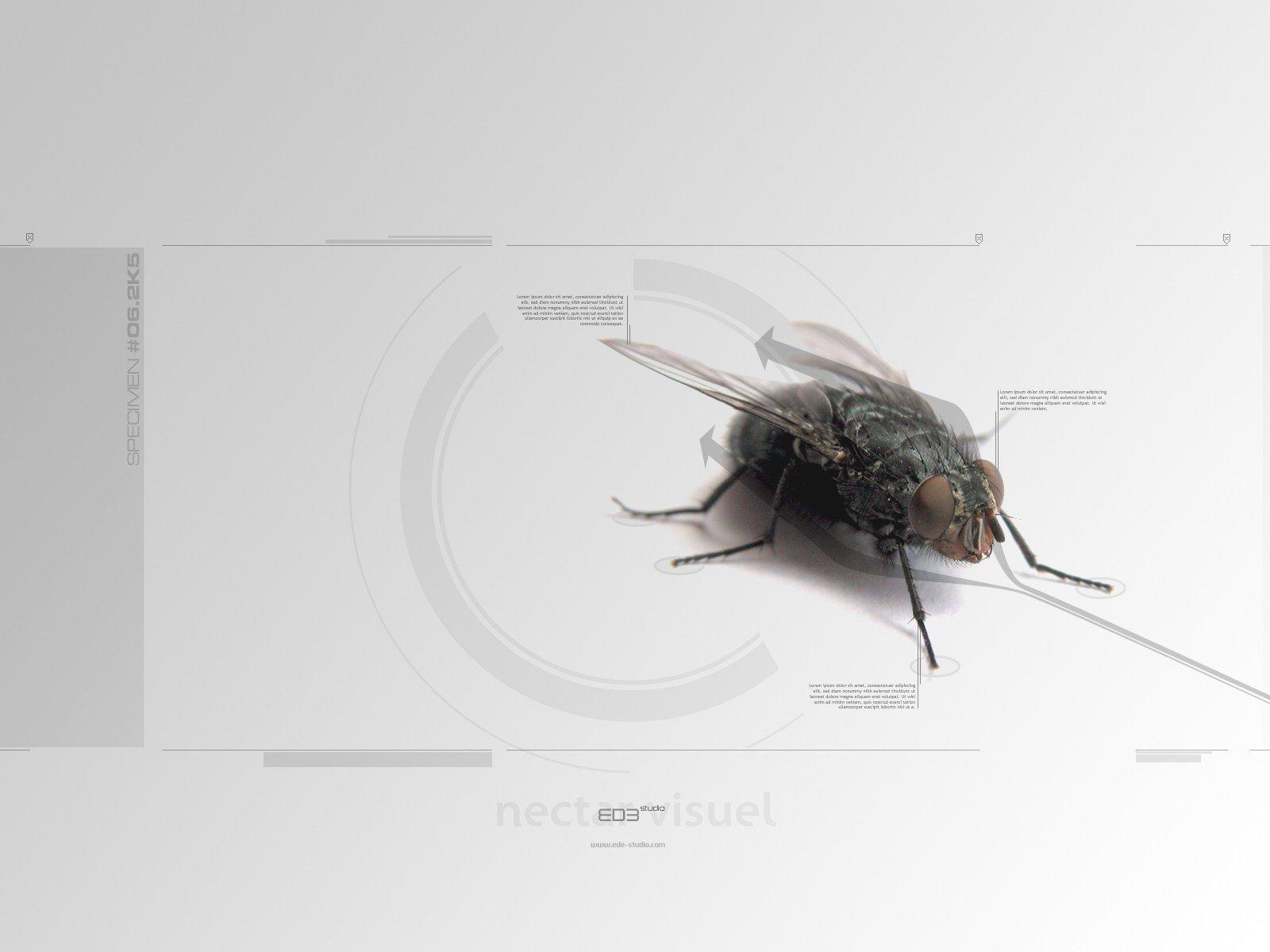 Механическая муха скачать