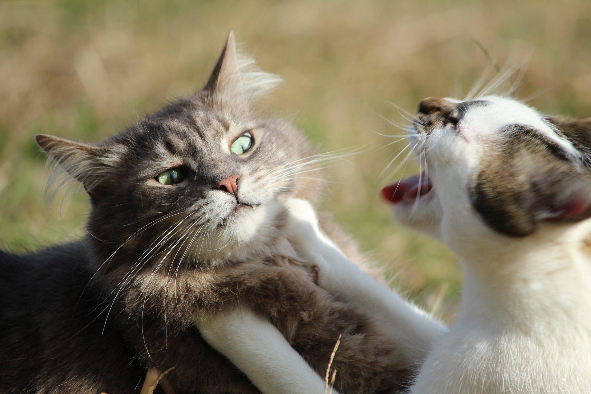 бесплатная картинки с говорящими котами способ