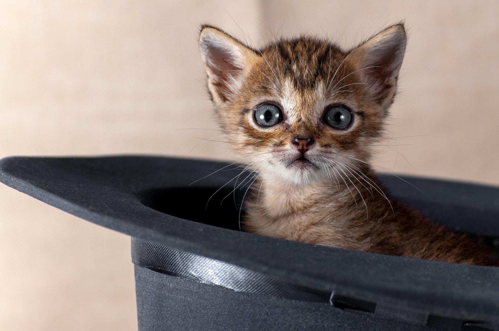 Смешные милые кошки картинки