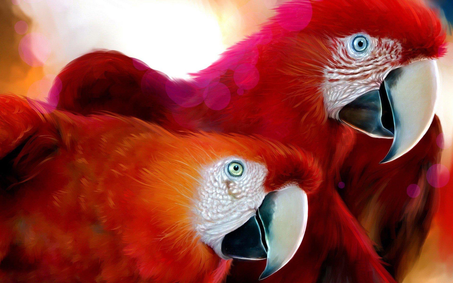 Красный попугай загрузить