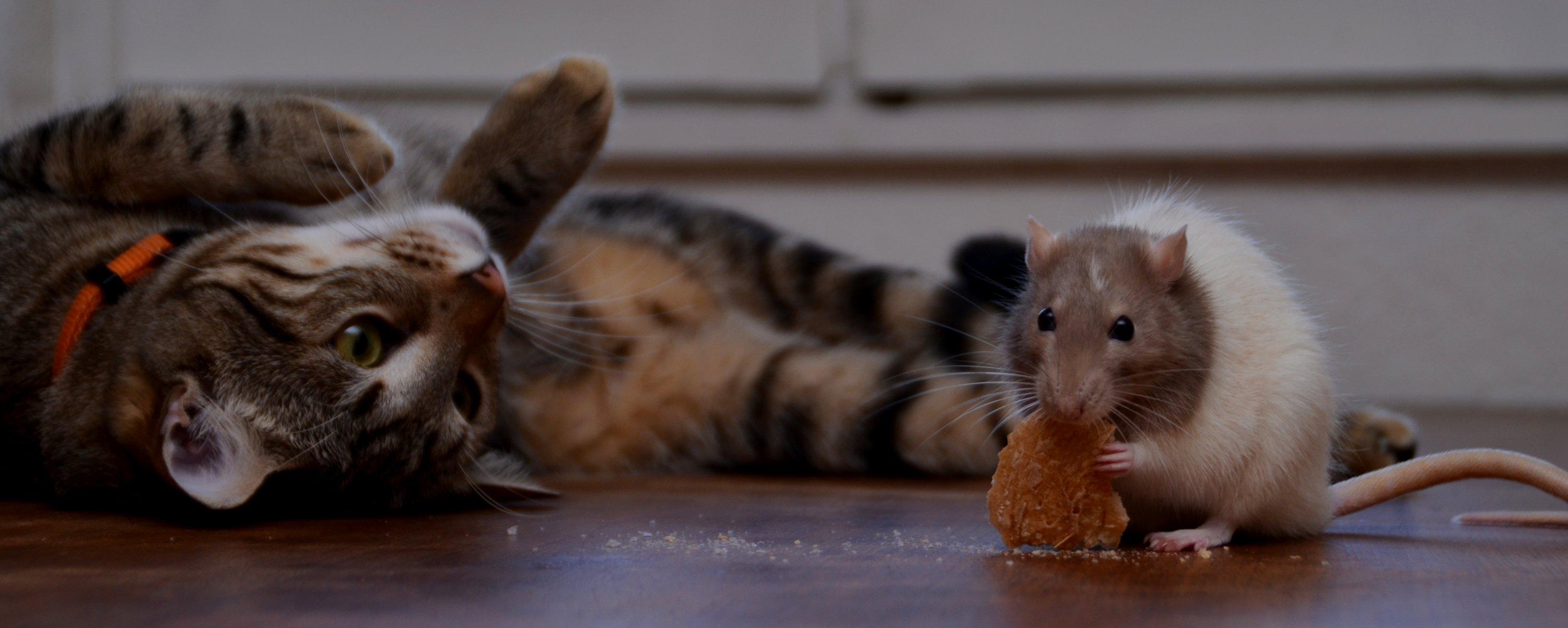Старик, смешные картинки с котом и мышью