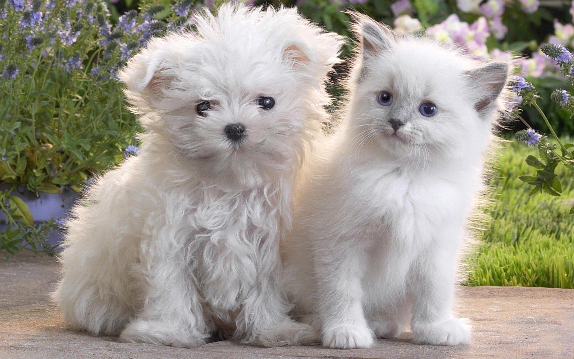 Обои кот, Собака, щенок. Собаки foto 10