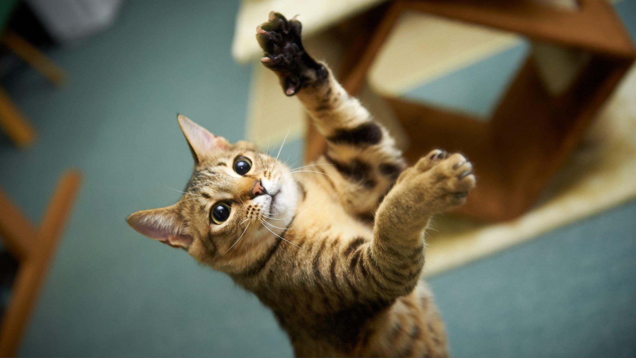 Котенок животное играется скачать