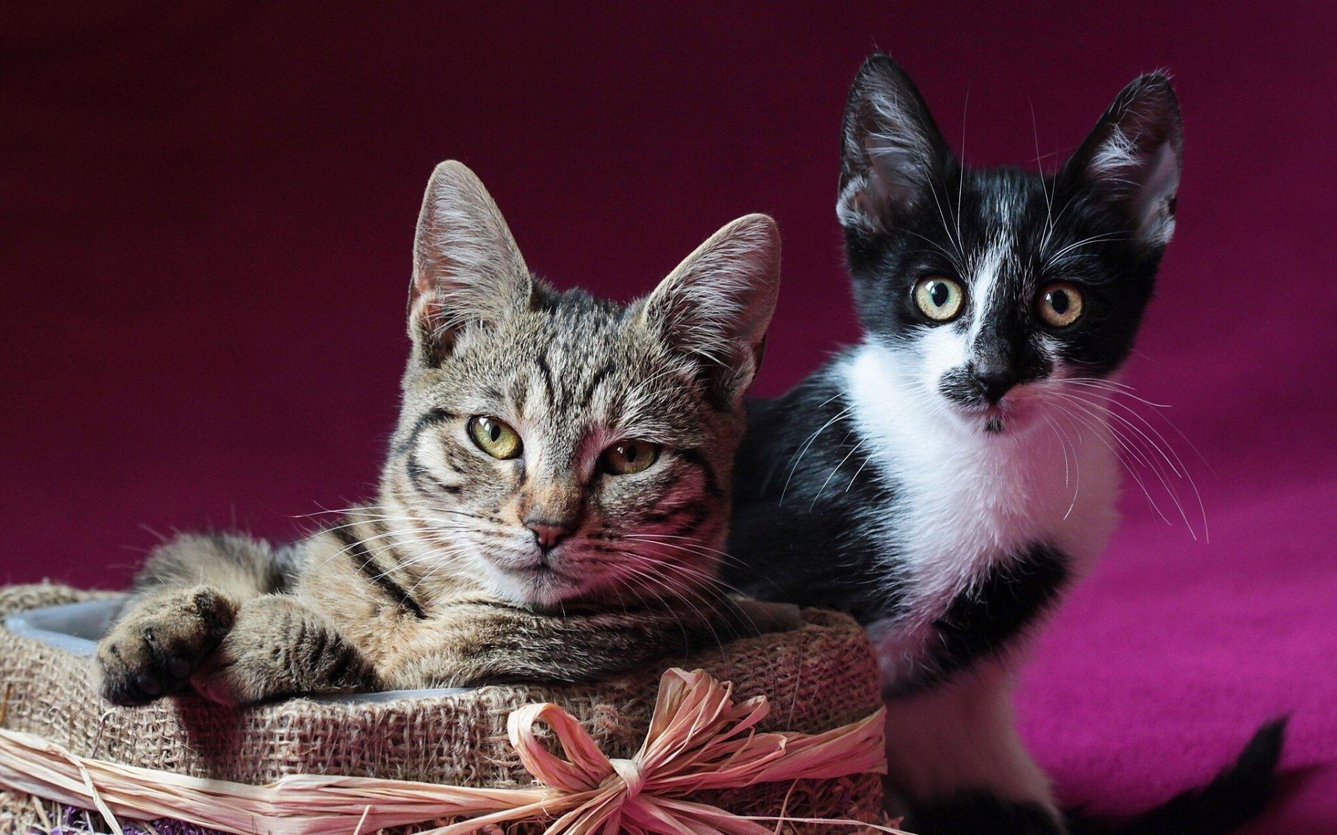 котенок картинки с кошками