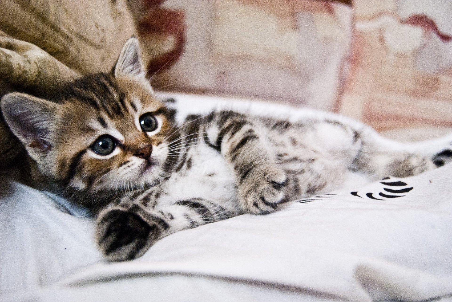кот животное котенок постель загрузить