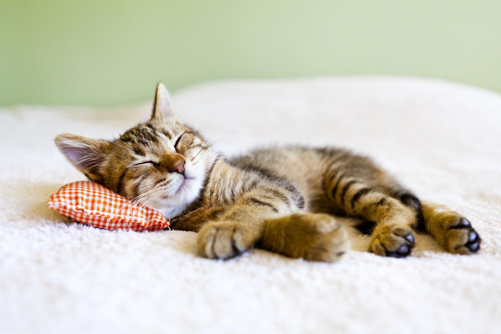 Картинки, картинки сонный котенок