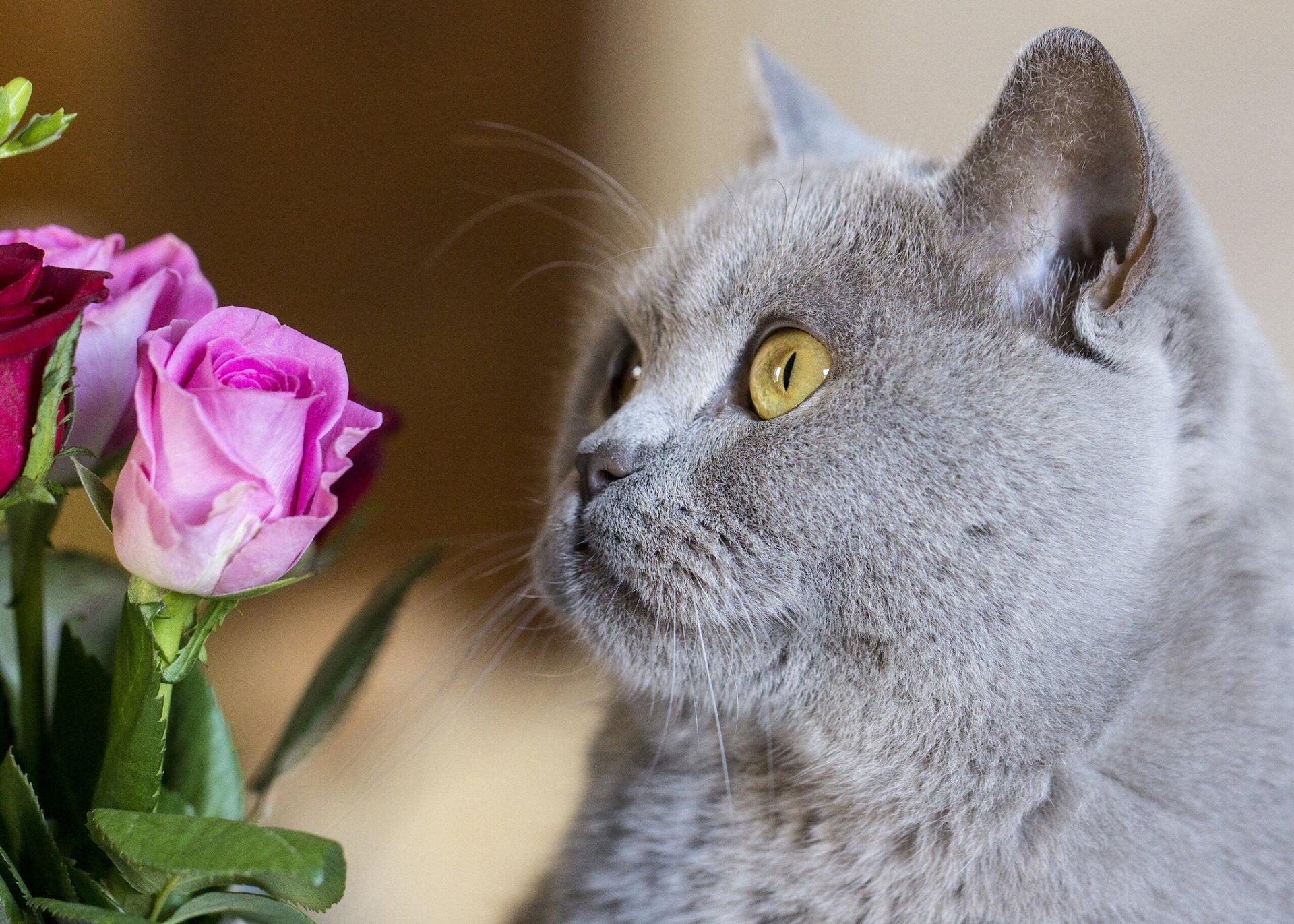 где кошка с цветами поздравления фото общем случае чем