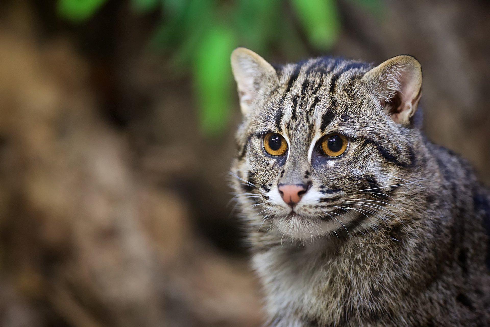 кошка фото дикая