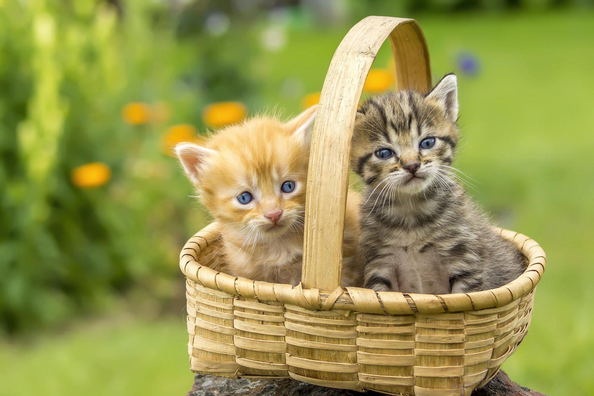 Картинки красивые котята в корзинках