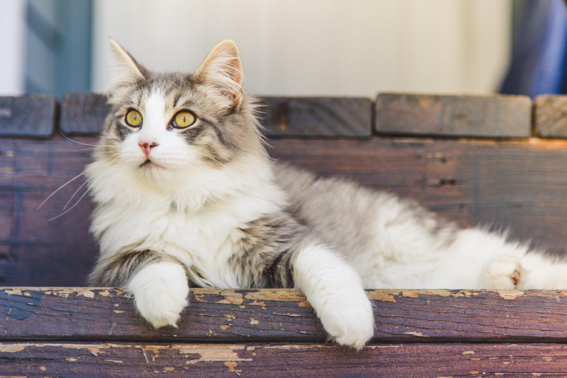 Картинки красивые кошки пушистые, днем взятия