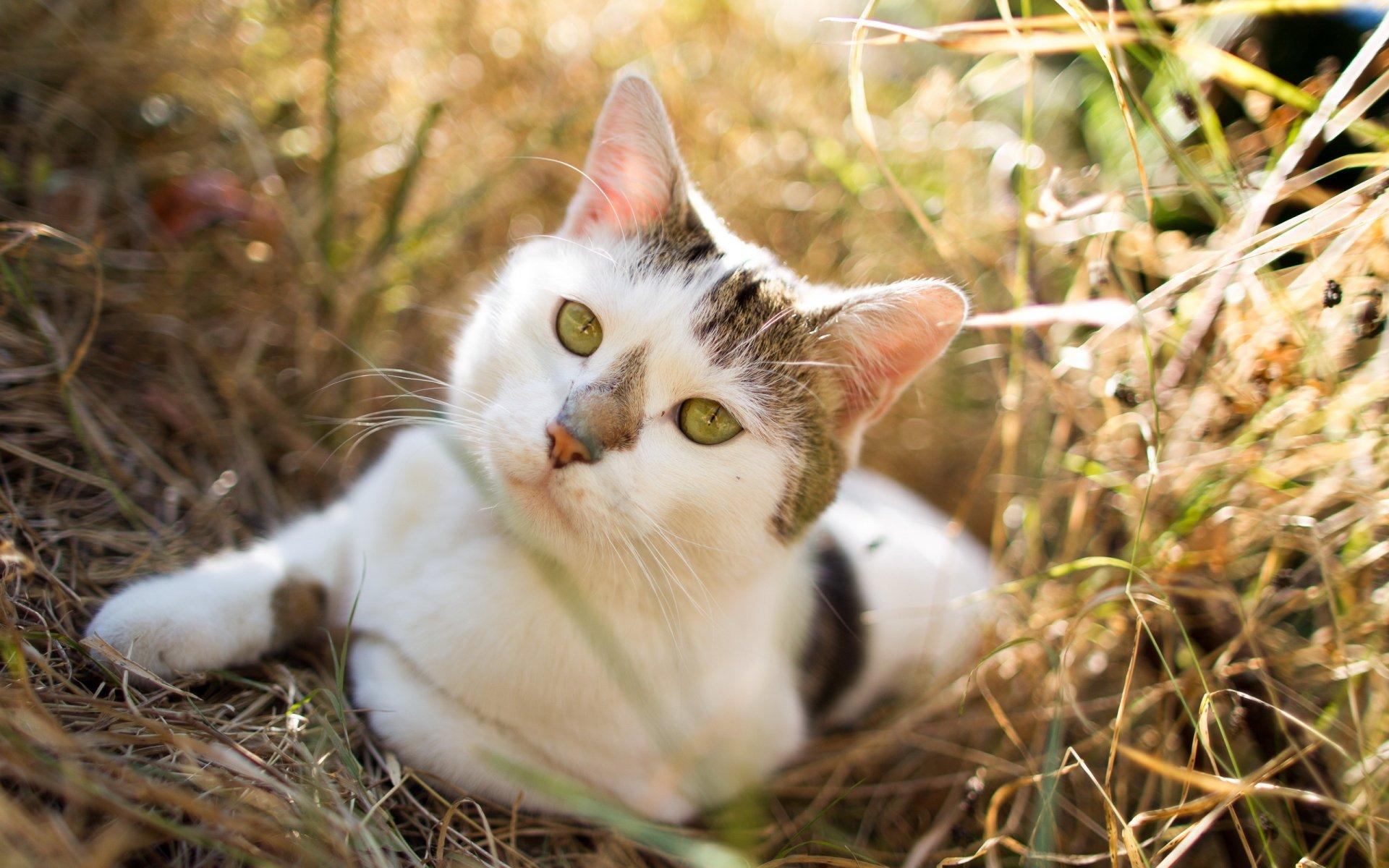 именно красивые картинки кошки на природе тренеру знакома ситуация
