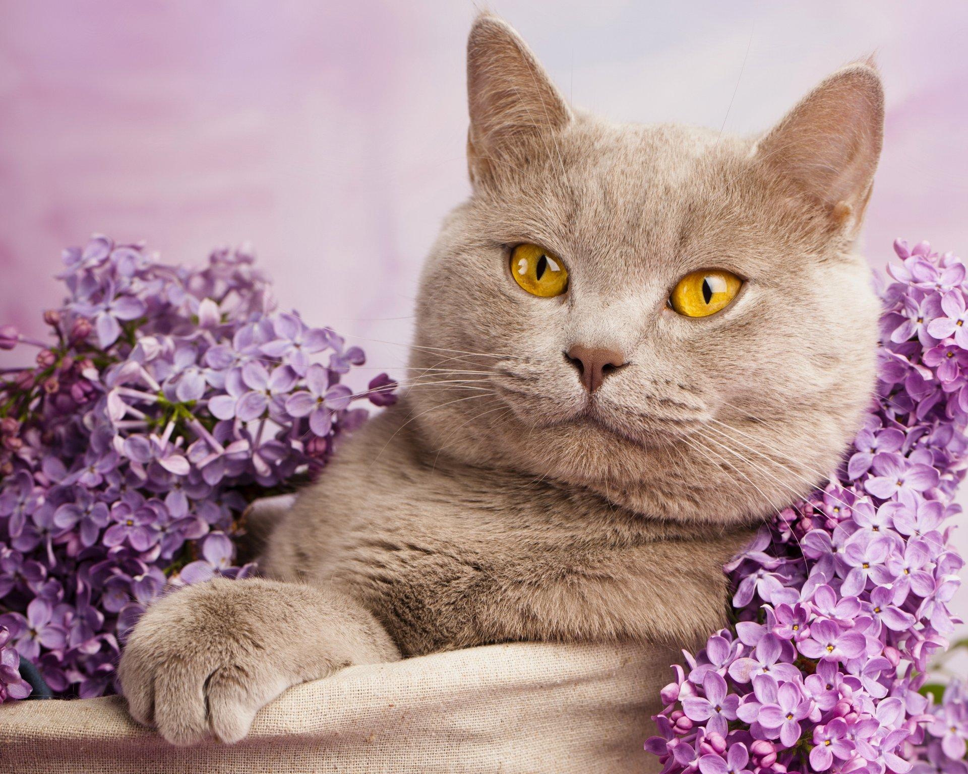 Кошка и коты картинки