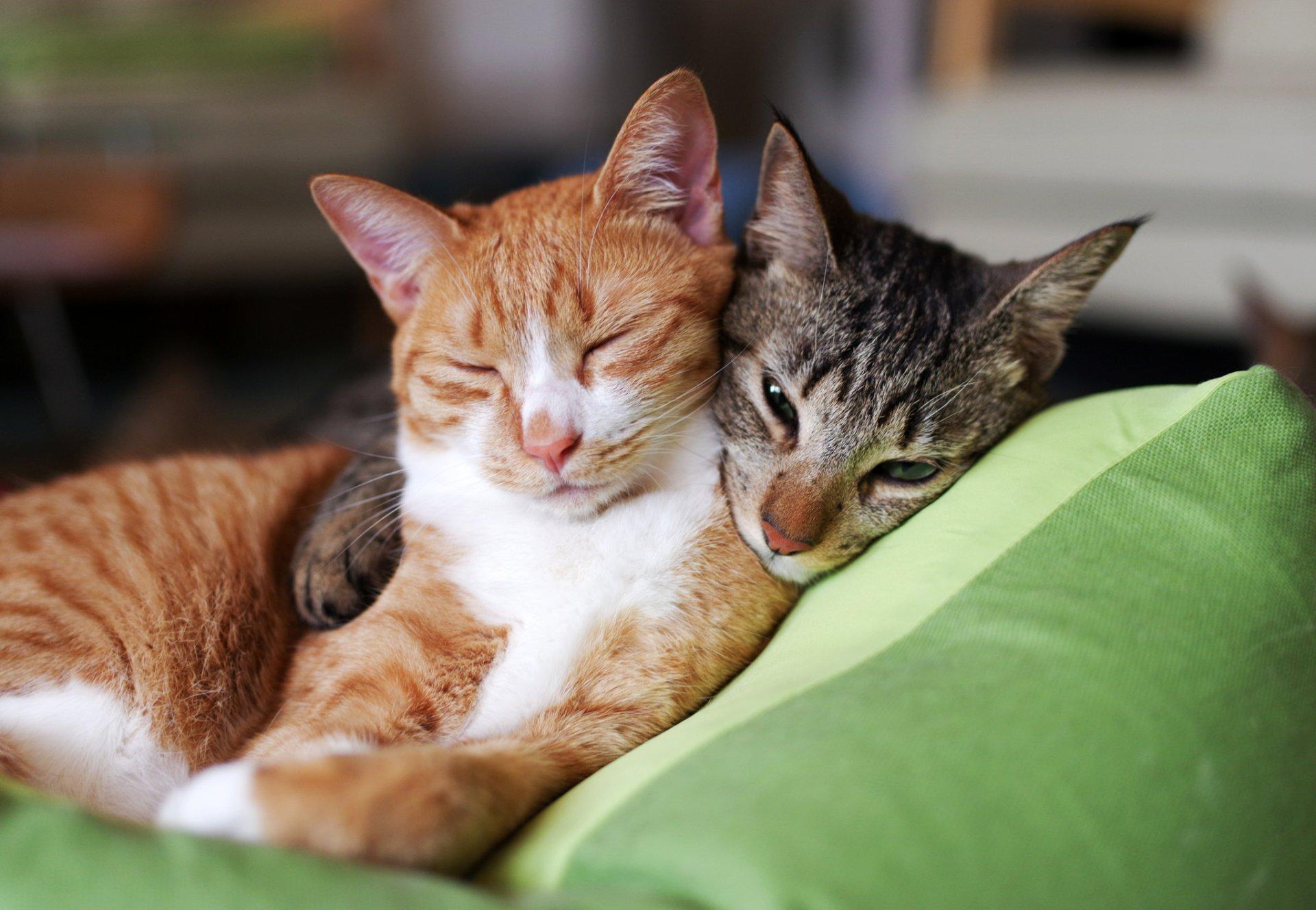Обои Соня, спит, лапки, Кошка. Кошки foto 9