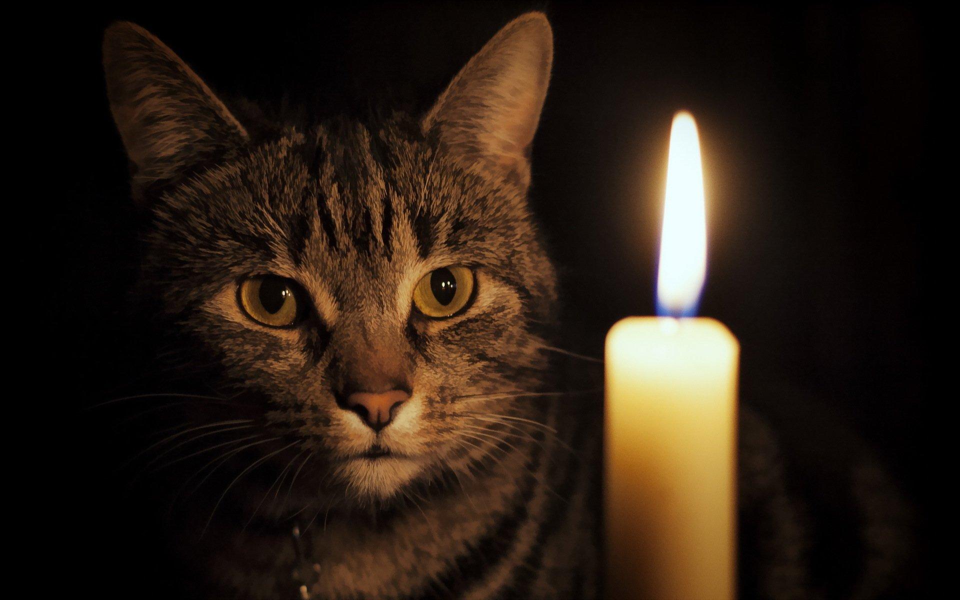 картинки свеча памяти животным назвали заказчика