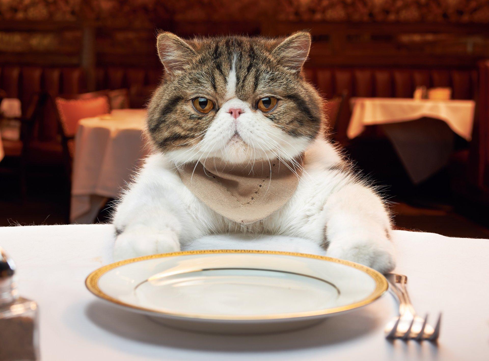 картинка пойдем кушать работу запросу посудница