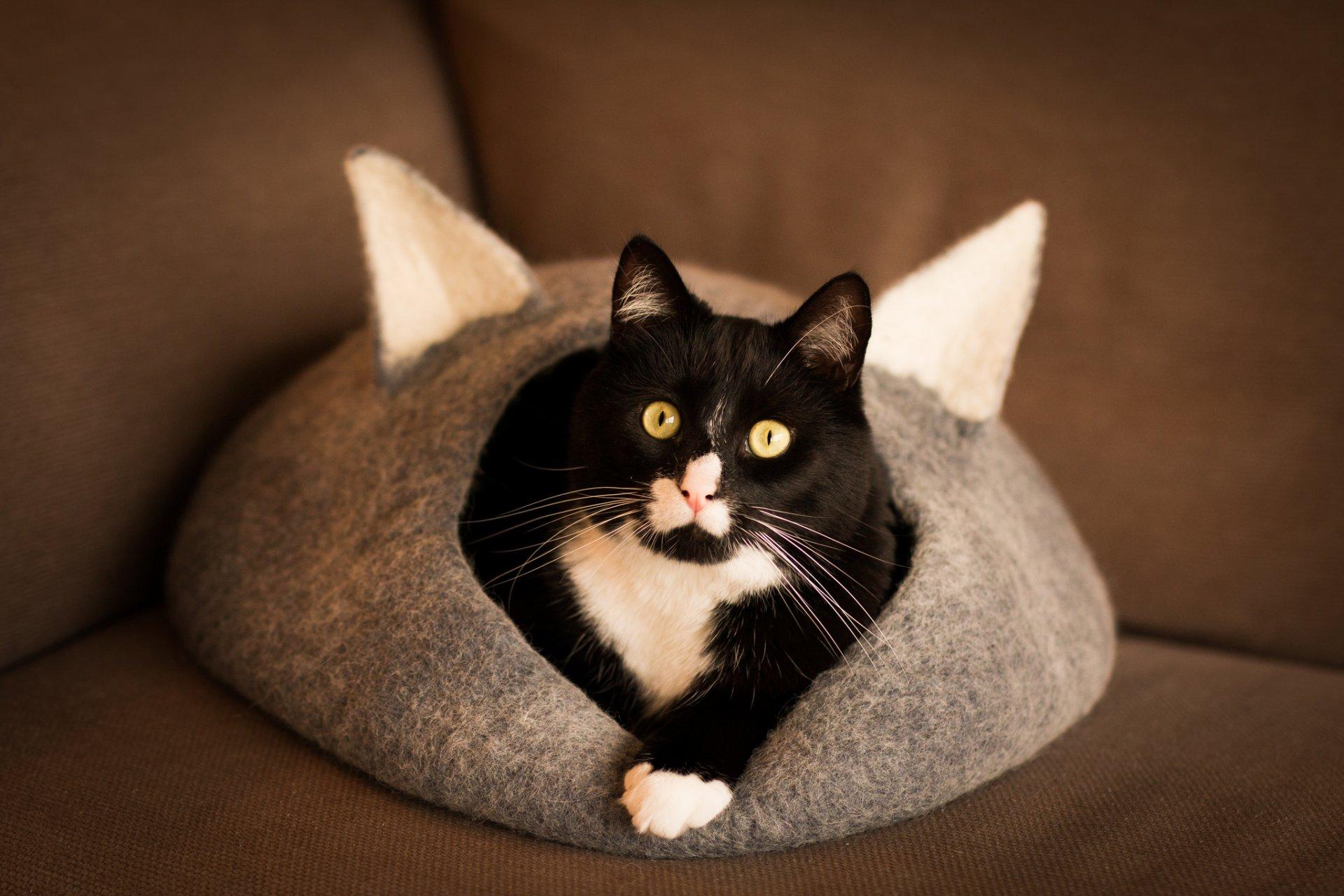 Необычные домики для кошек и собак
