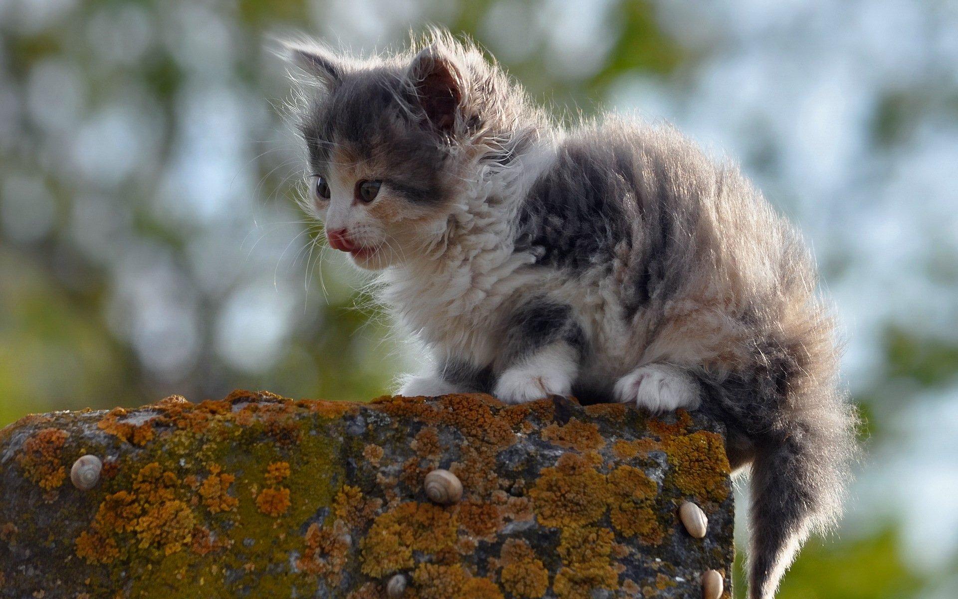 Днем, яндекс картинки с кошками природа