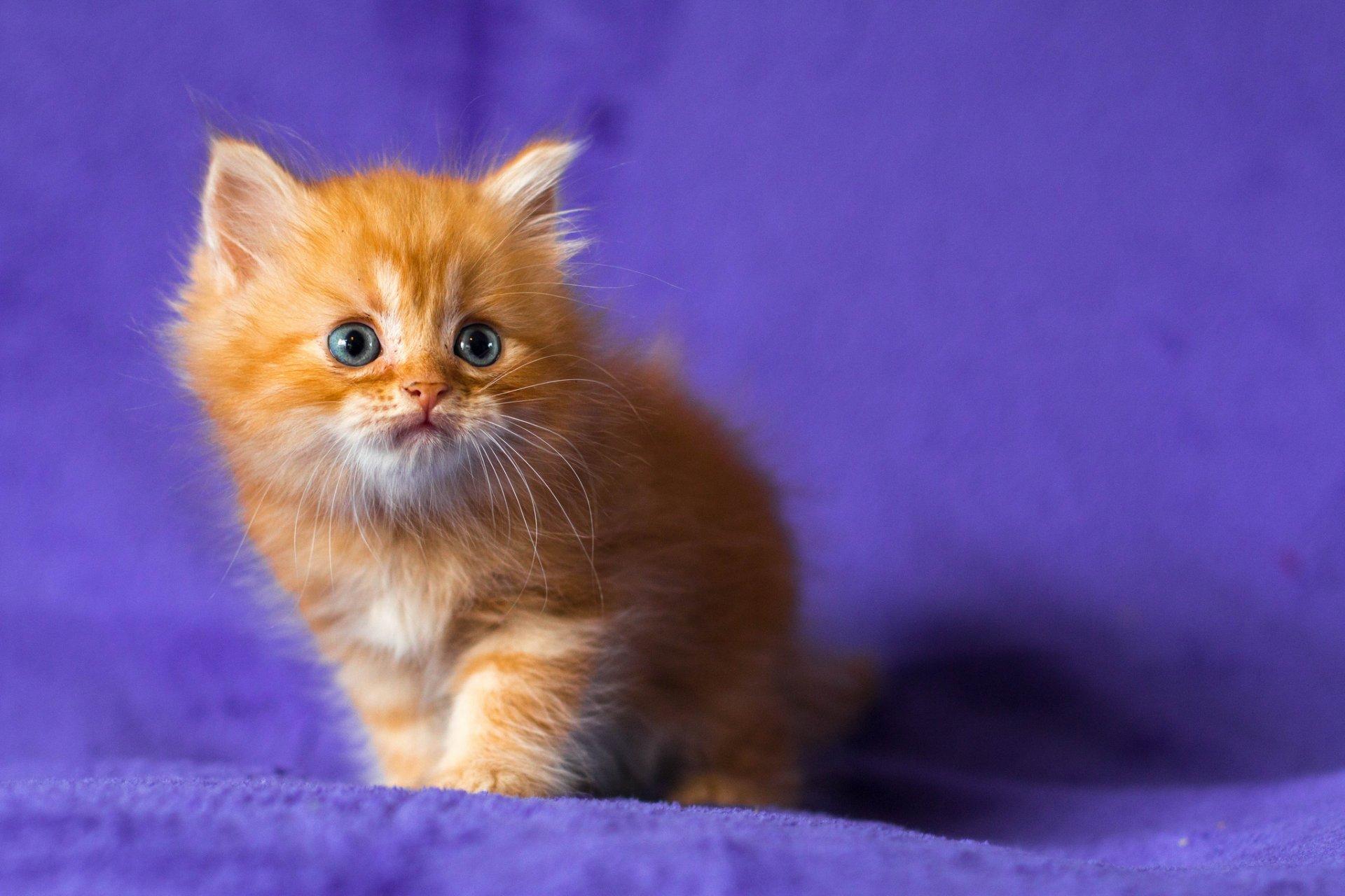 картинки рыжего котенка видите, осы питаются
