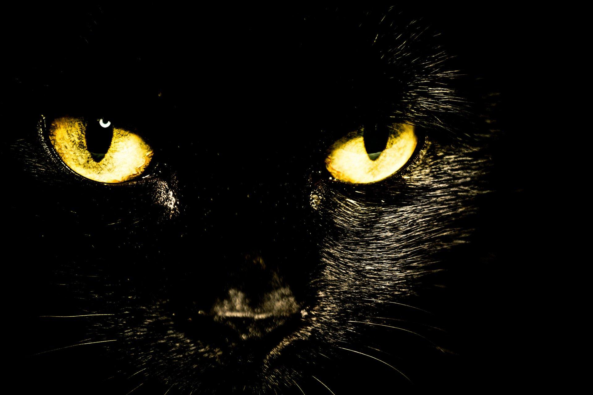 обои на рабочий стол глаза кошки на темном фоне № 237995 без смс