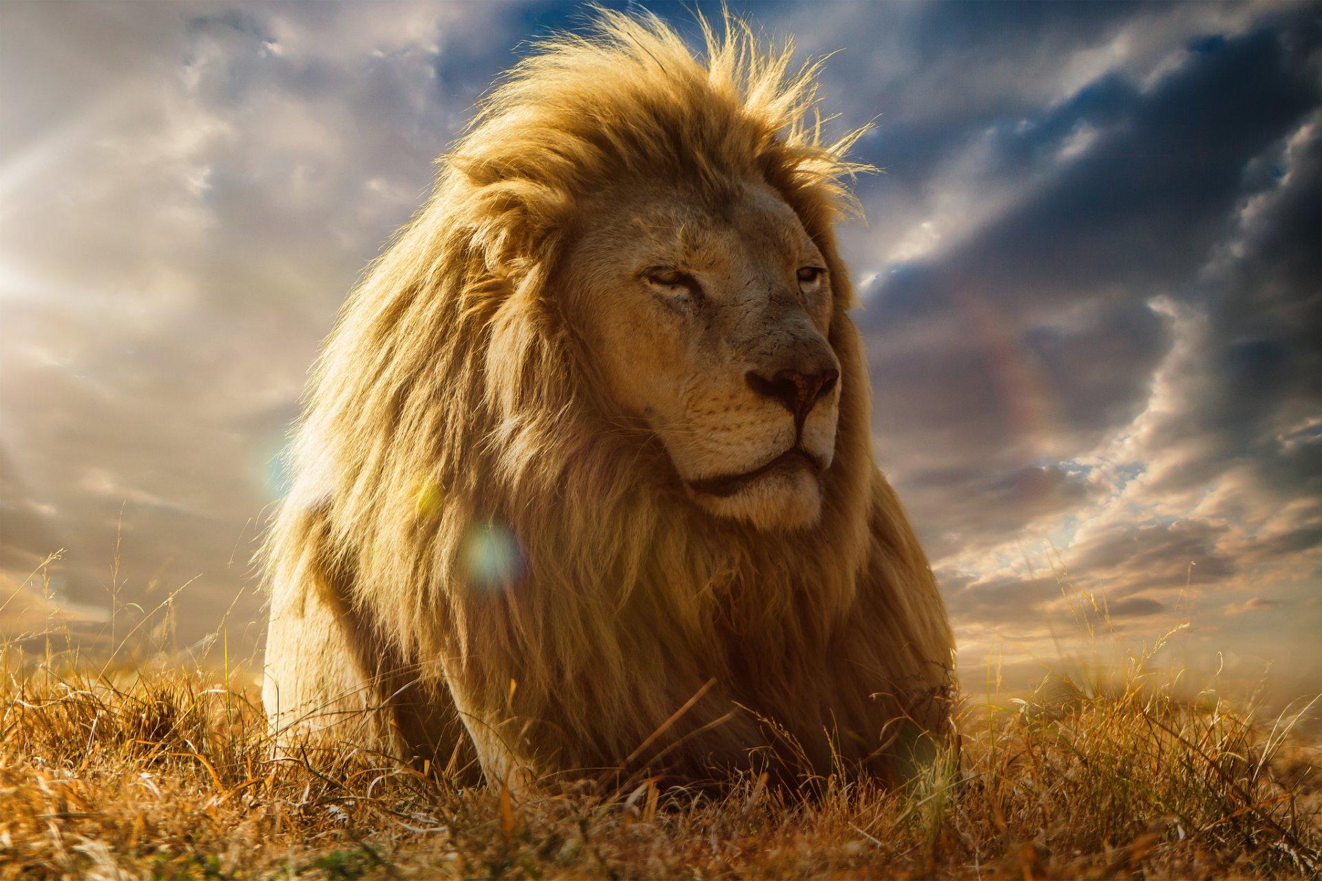 красивые обои на телефон львы последнюю резервную