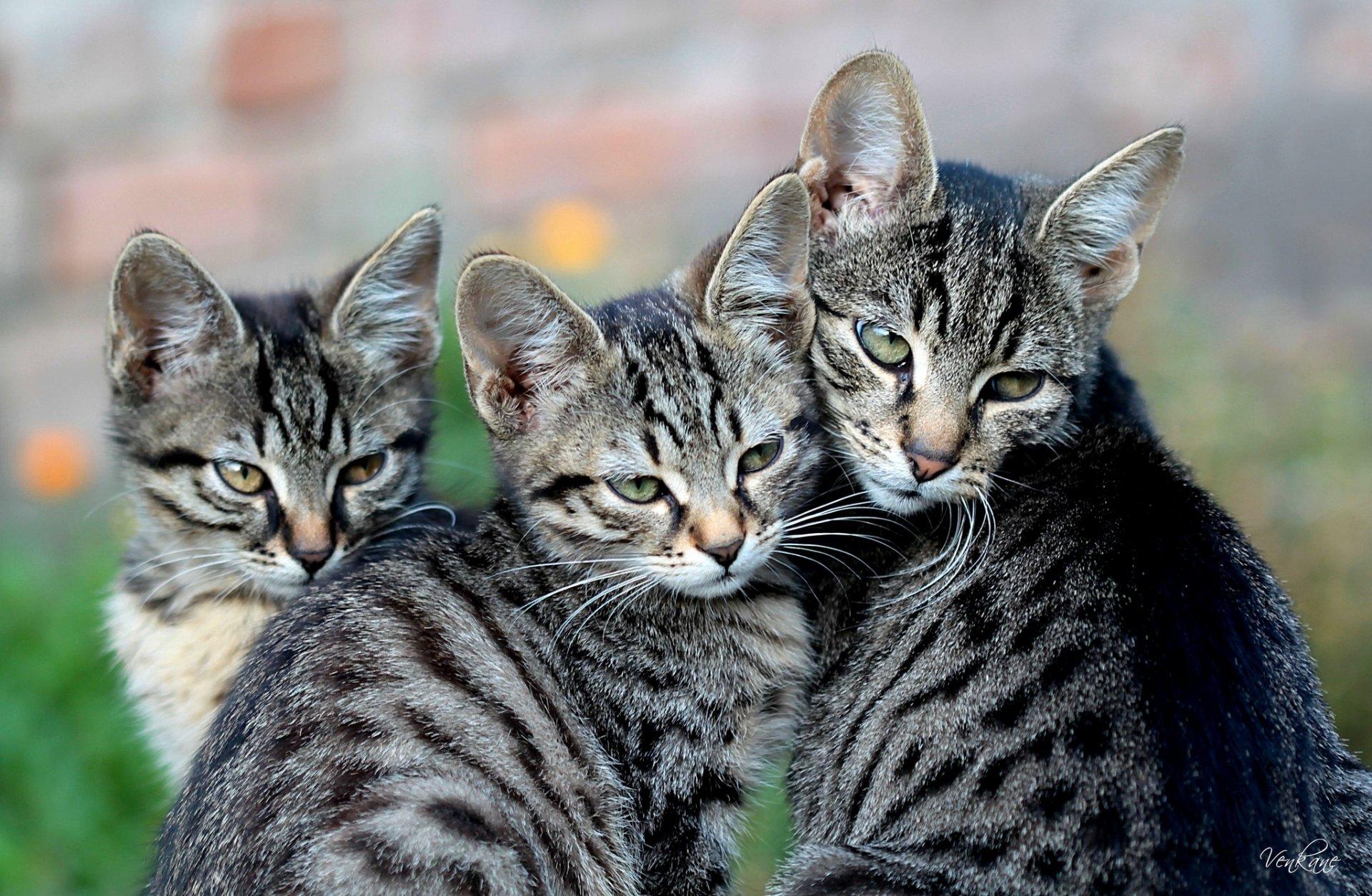 Смотреть картинки кошек котов котят и кошек