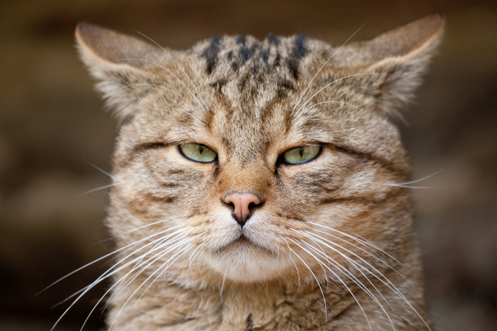 Прикольные кошачьи морды картинки, открытка