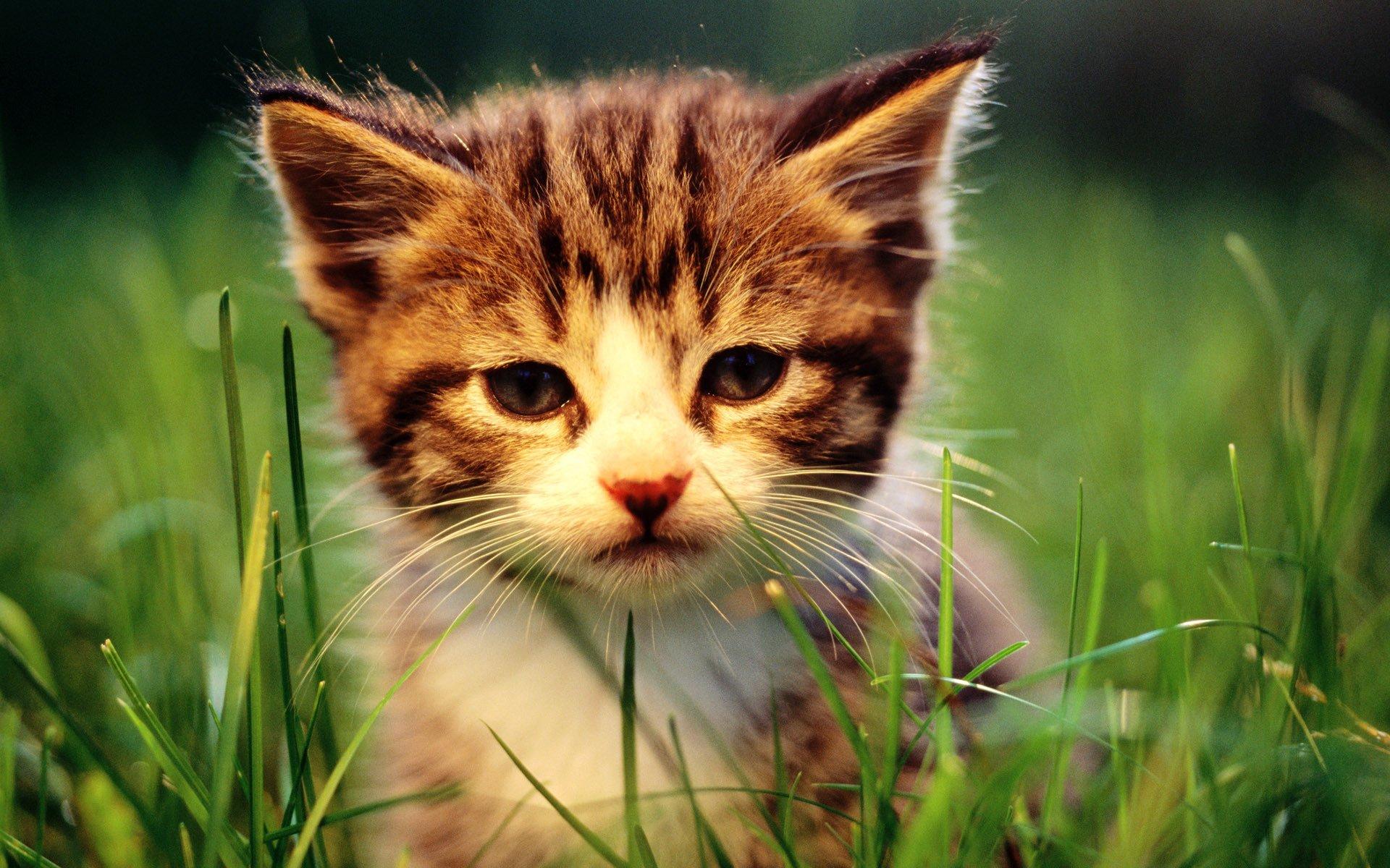 Картинки котята прикольные на рабочий стол