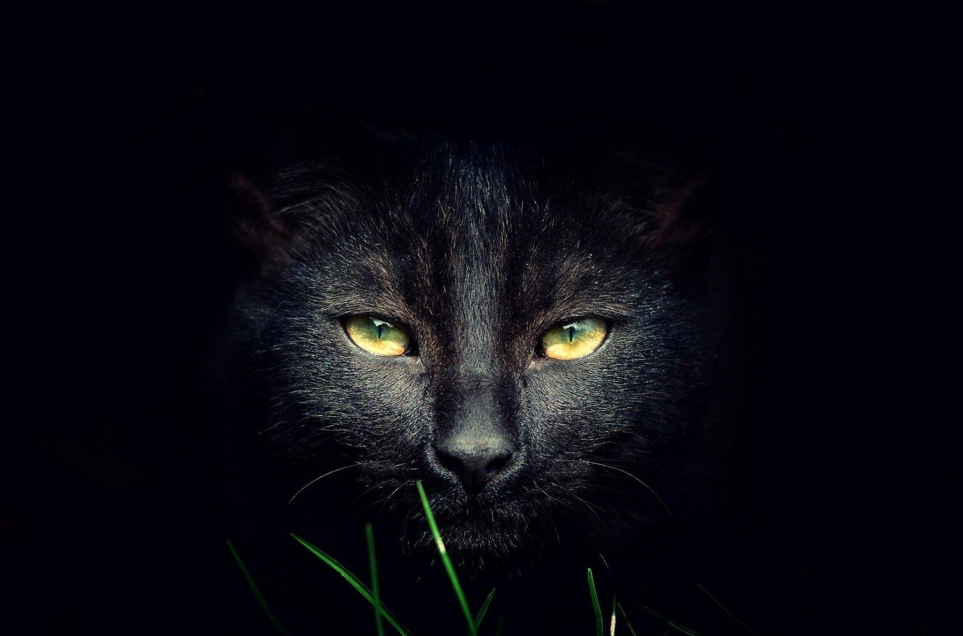 обои на рабочий стол глаза кошки на темном фоне № 237981 без смс