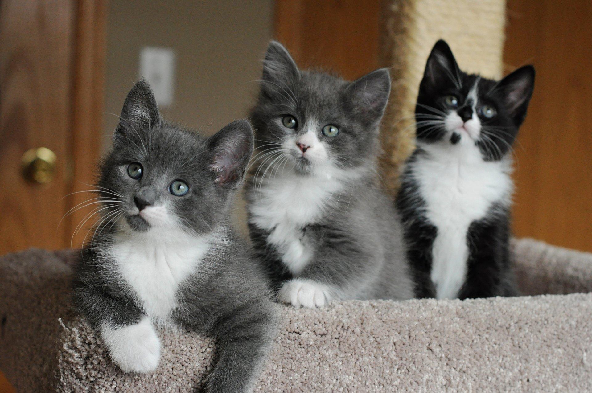 фото котят счуа местных