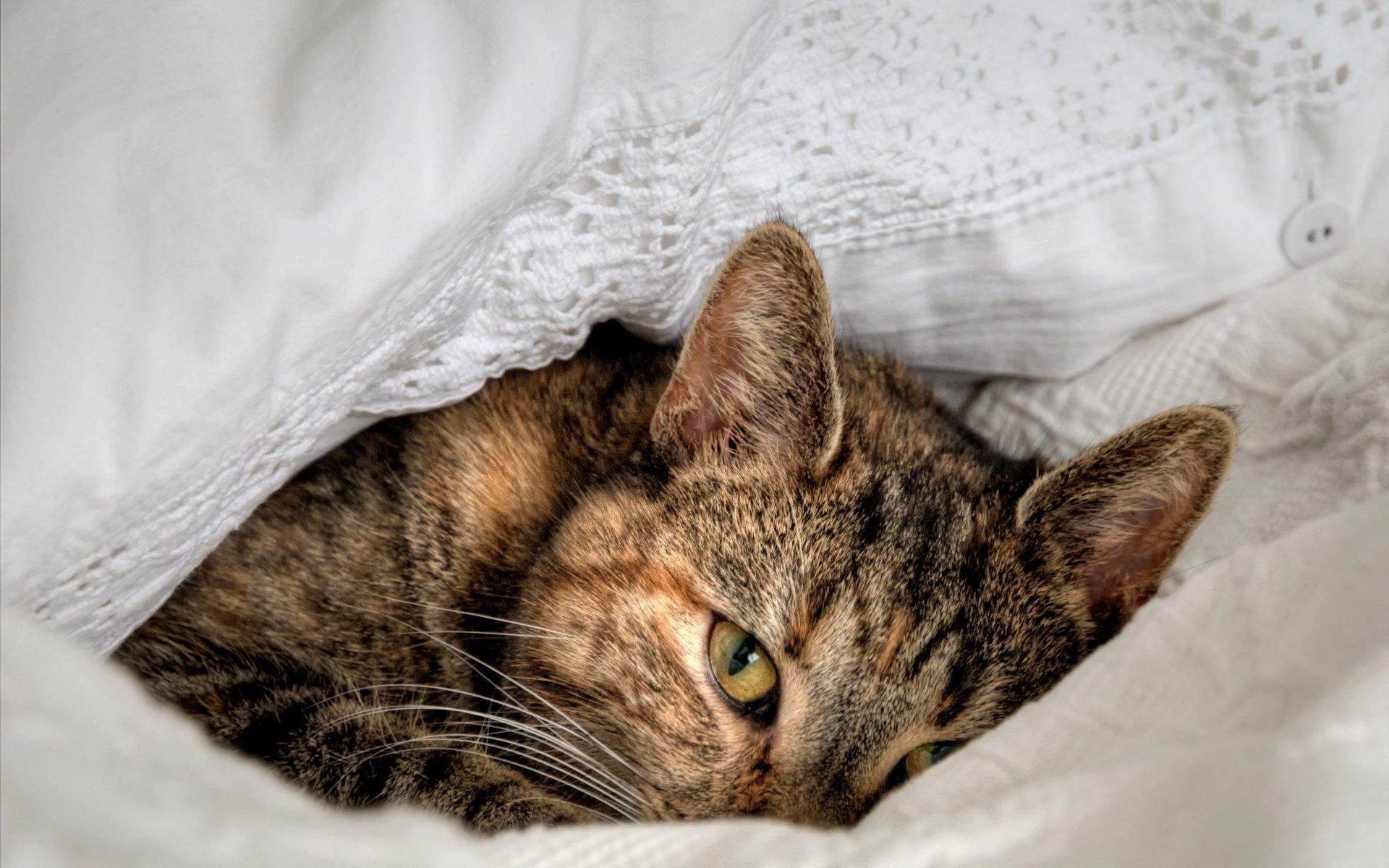 котенок в одеяле скачать