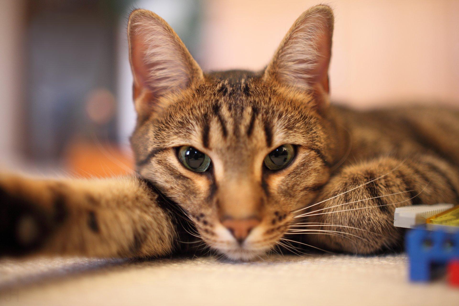 Картинки с котом на рабочий стол