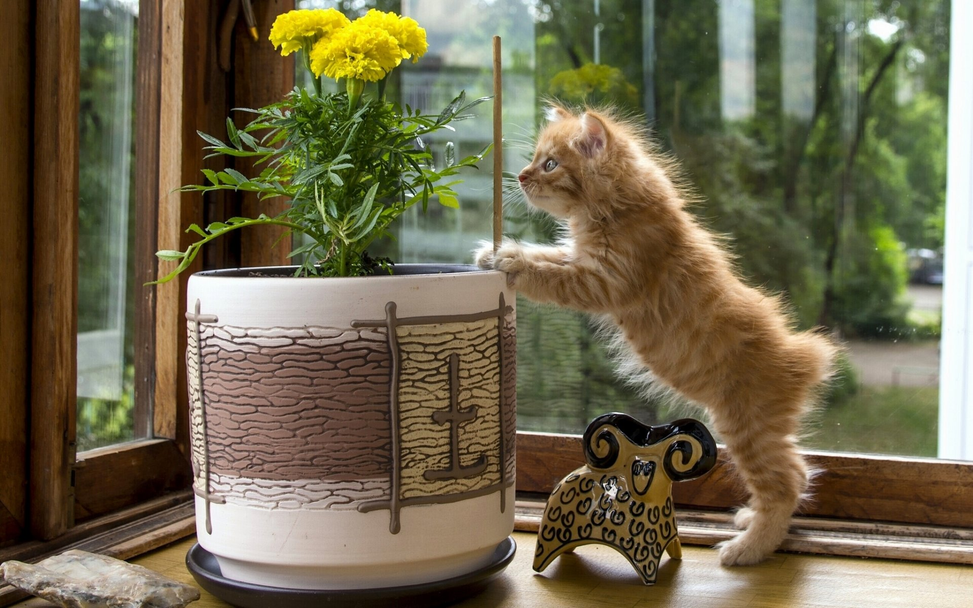 С добрым утром картинки с котом и гнездом на голове