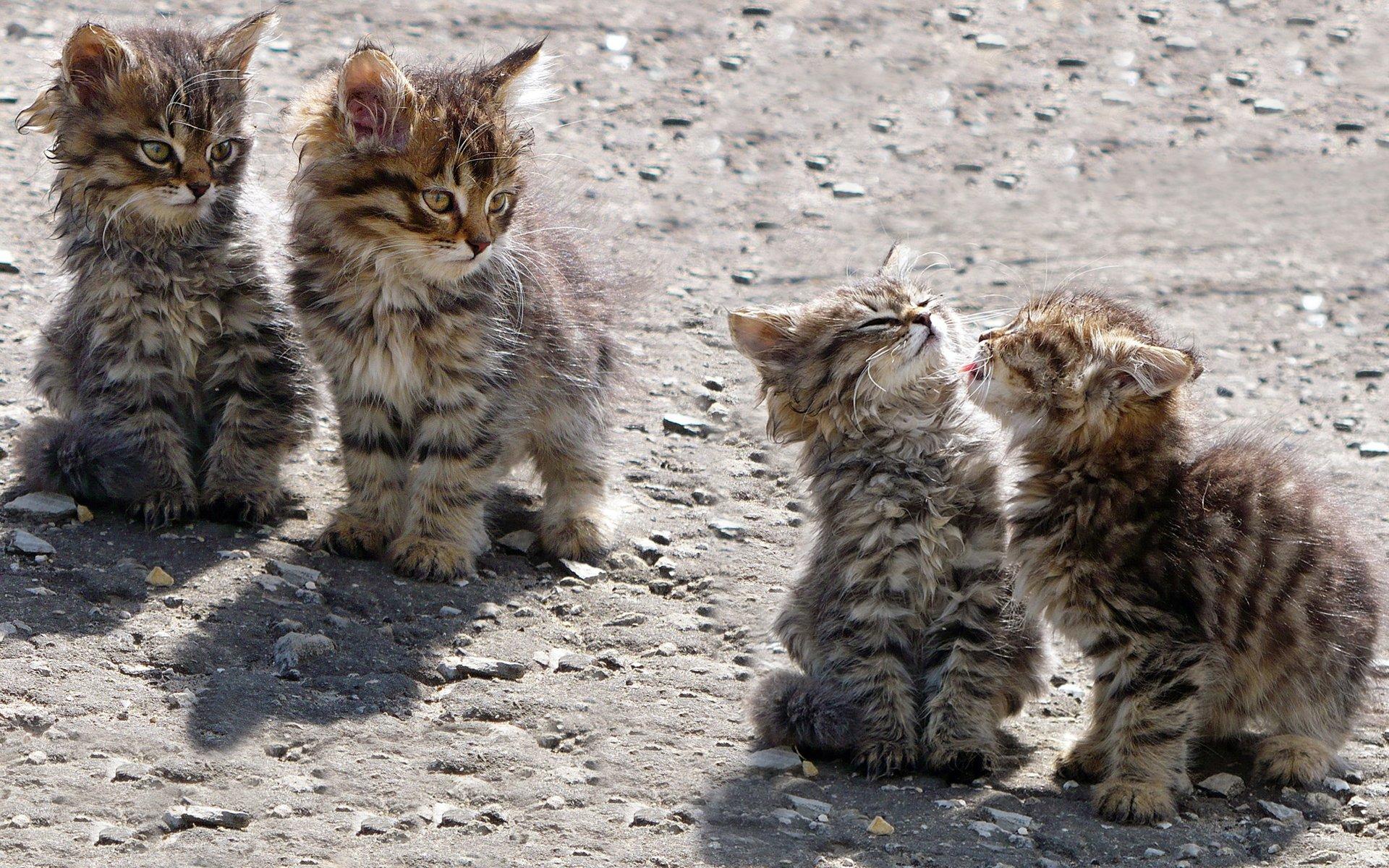 Добрым, фотки смешных кошек и котят