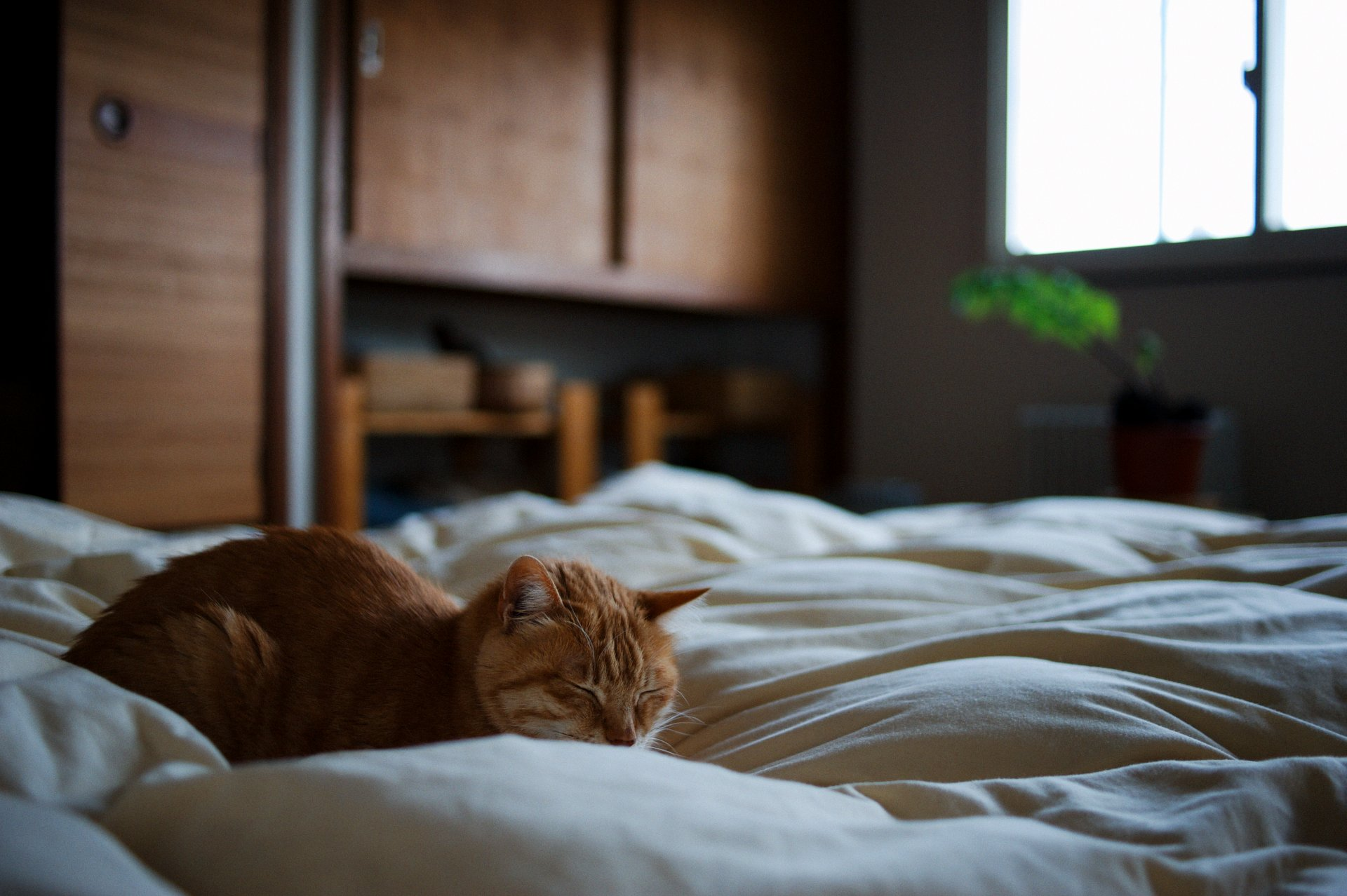 Котенок смотрящий из под кровати загрузить