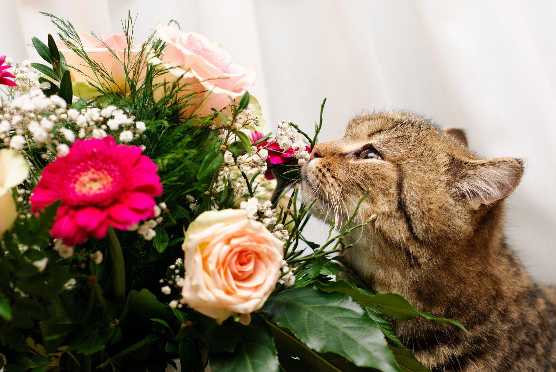 картинки котята с цветами роз кафе открытой