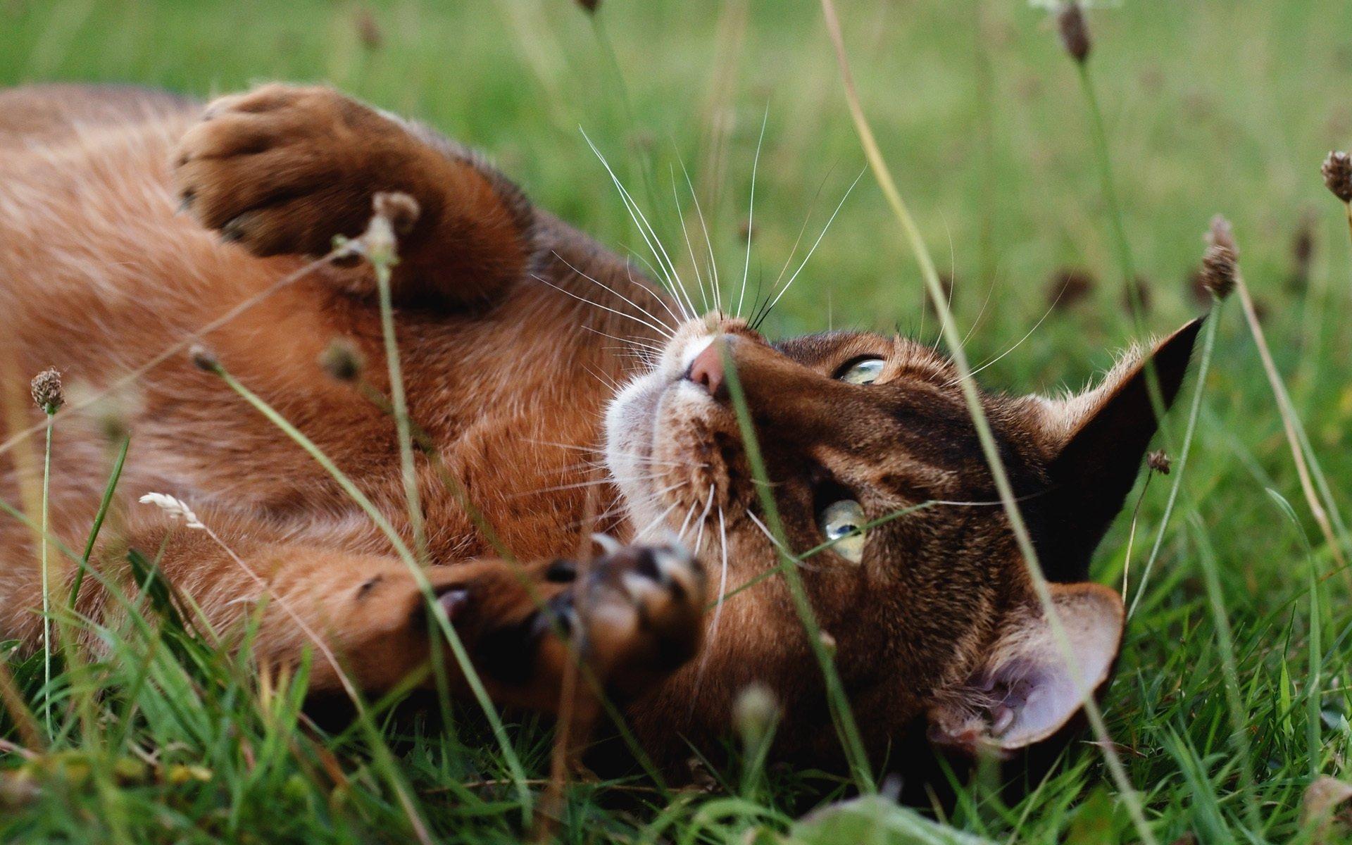 Кот в лесу в траве скачать