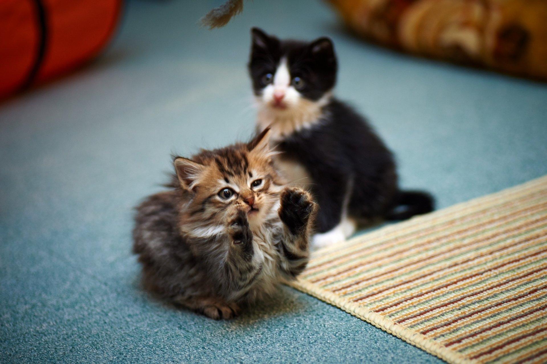 прикольные котята разливочная машина