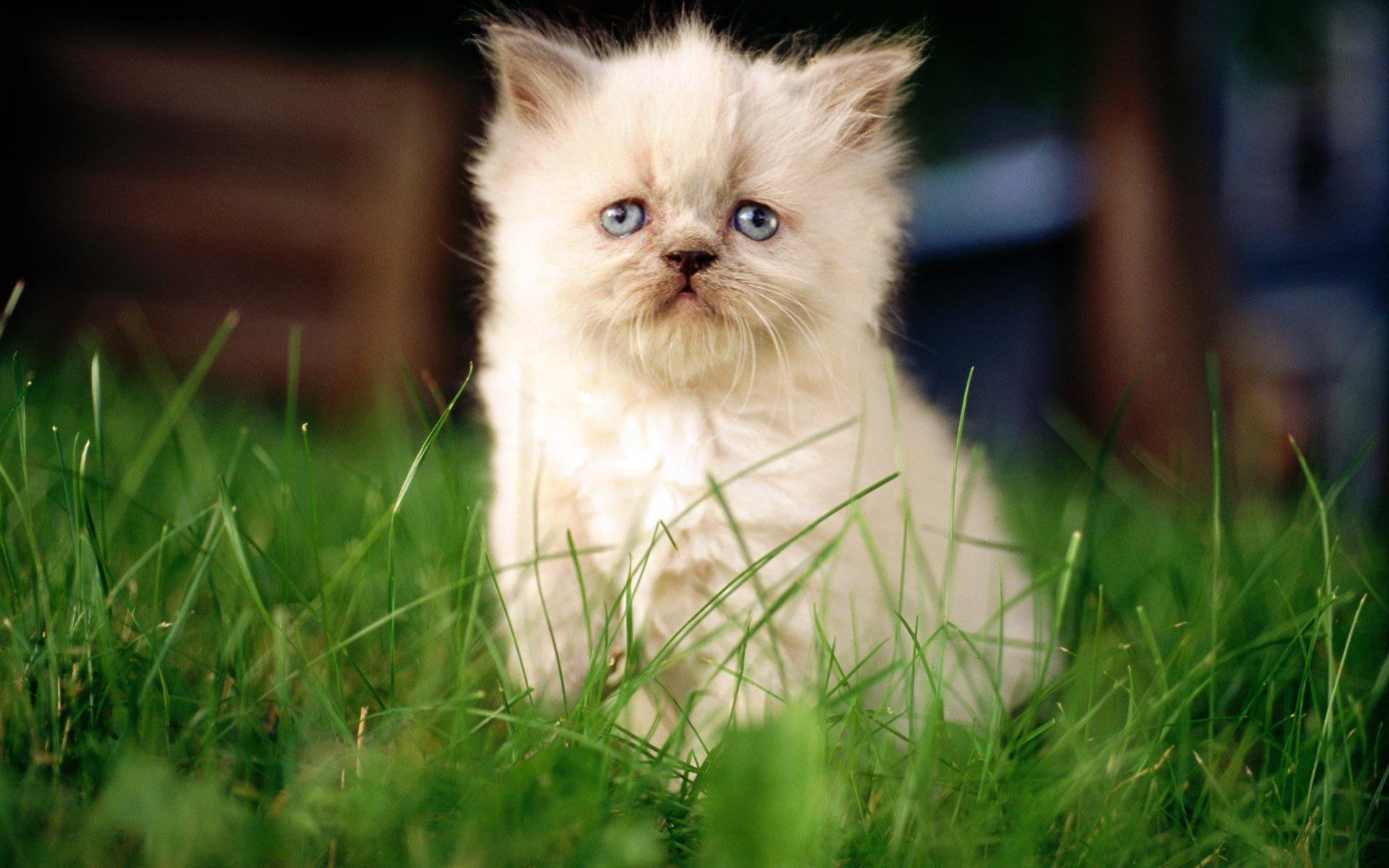 природа животные кот белый nature animals cat white  № 102748 без смс