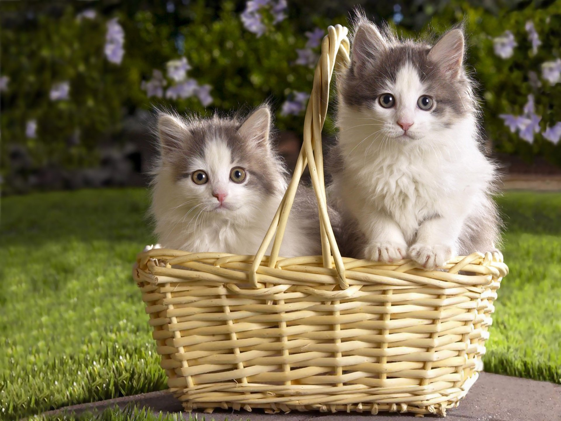 Картинки два котенка в корзинке